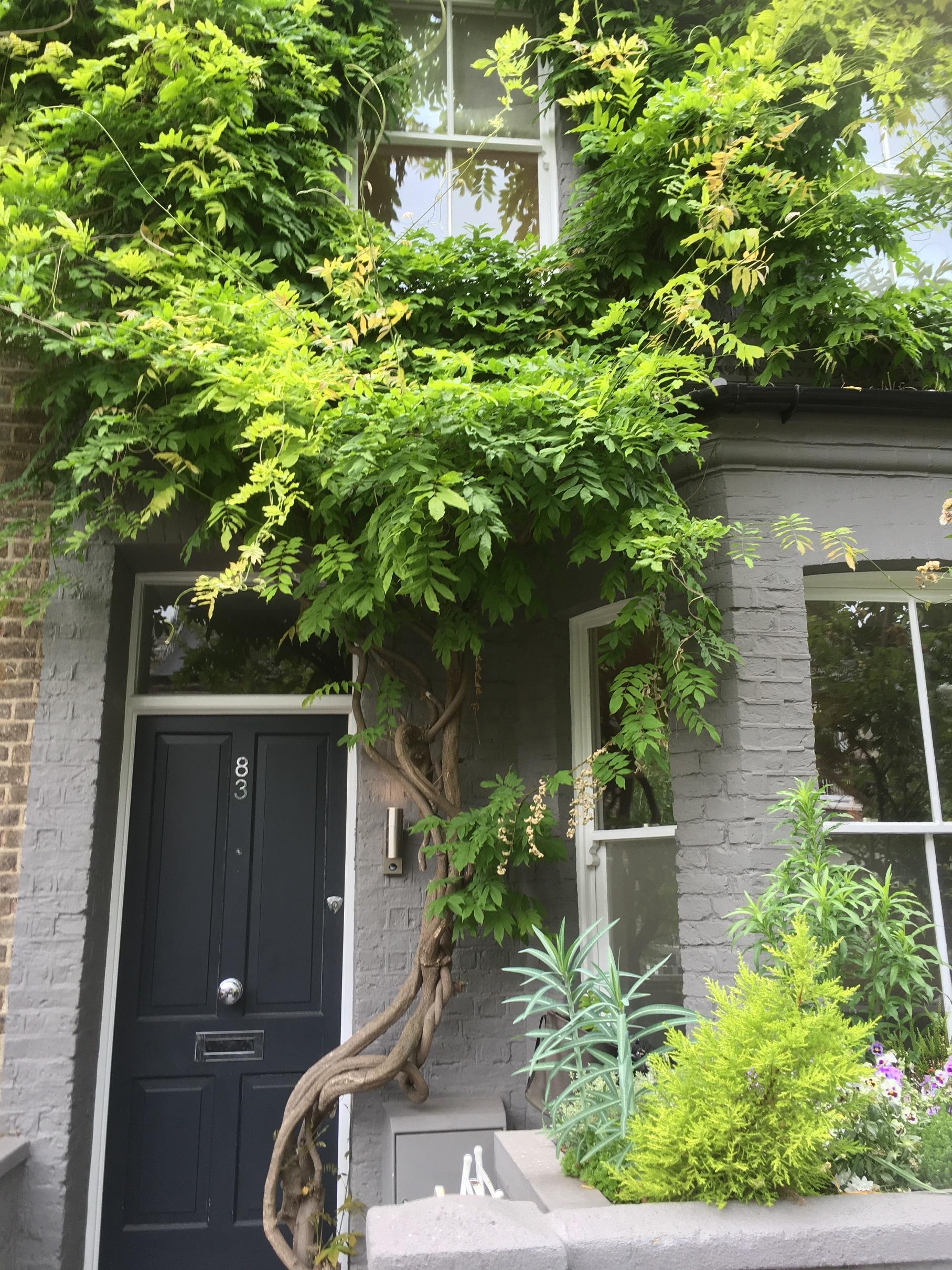 londonhouse_garden2