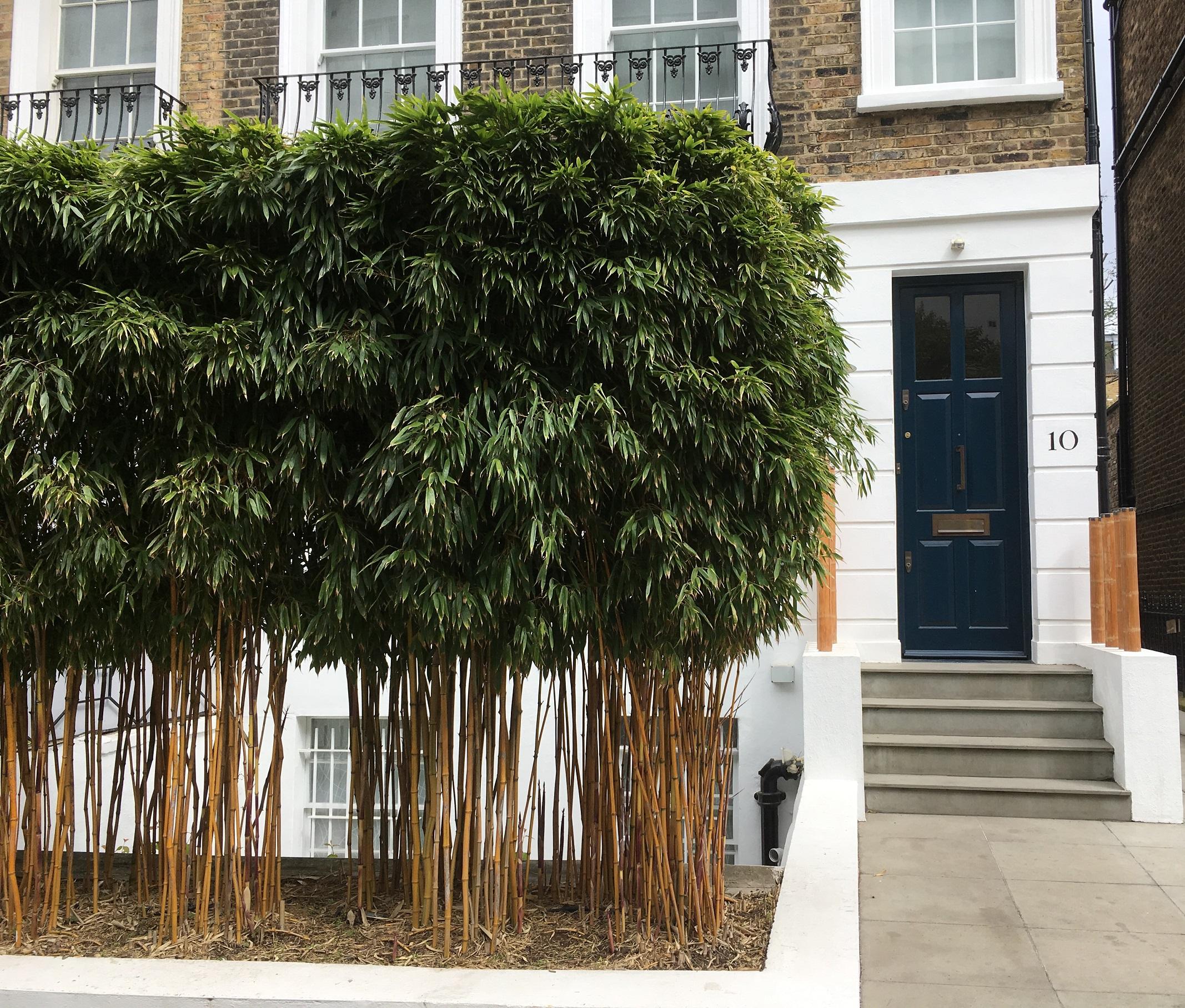 londonhouse_garden7