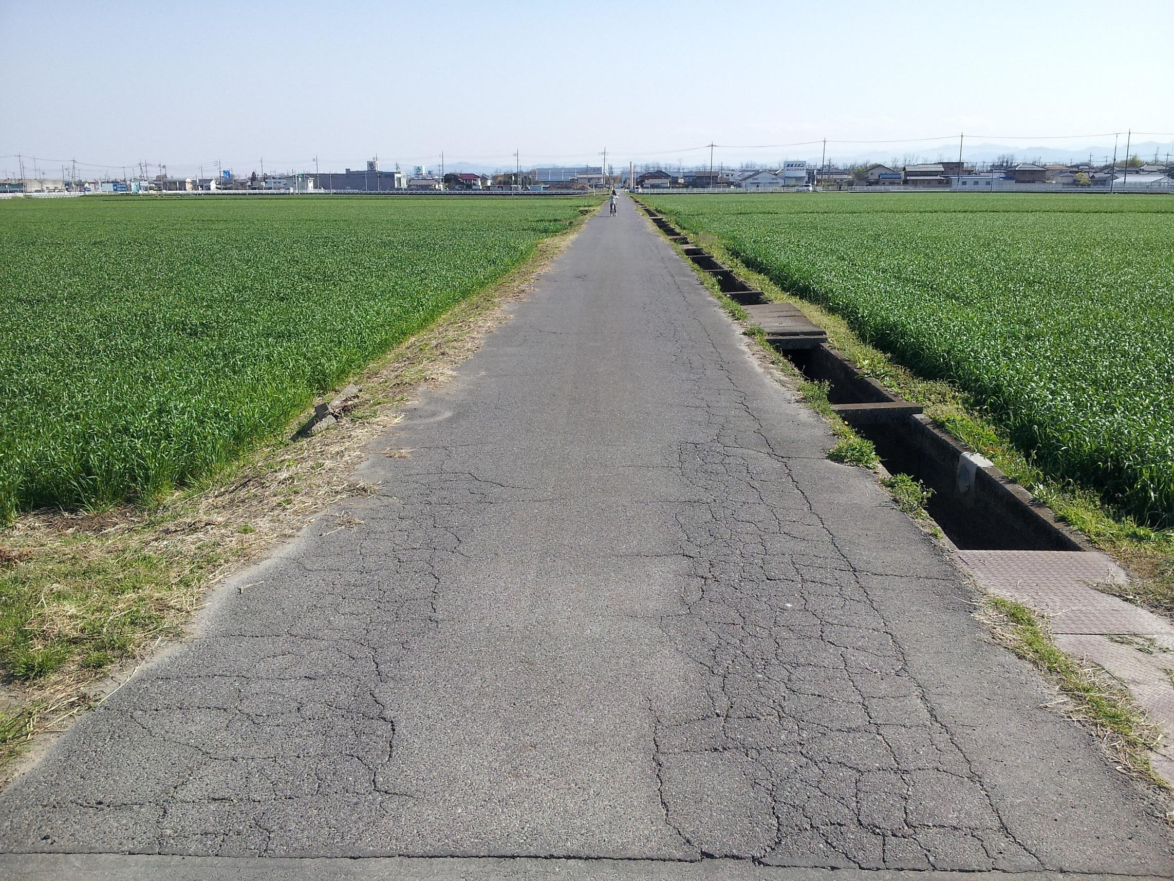 shokuniku road
